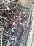 0830_Compost01b